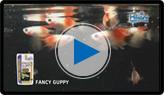 히카리 구피 동영상 보기